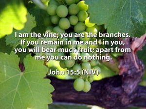 John15-5